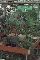 Photo of plants inside the Greenhouse at UW-Superior