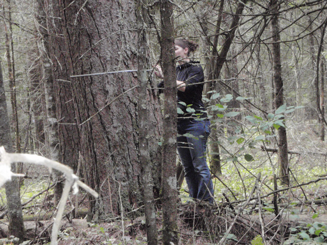 Stephanie Glass measuring Old Growth Forest near the Bois Brule River