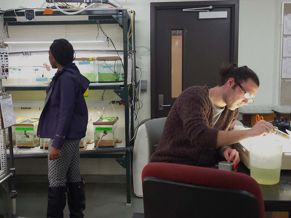 Students Adaeze Ndu and Dan Wisniewski working in the LSRI hatchery