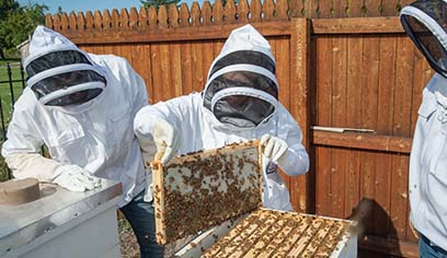 UWS students to sell UWS Apiary honey, give honey extraction demos