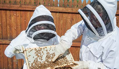 UW-Superior holding free beekeeping workshops