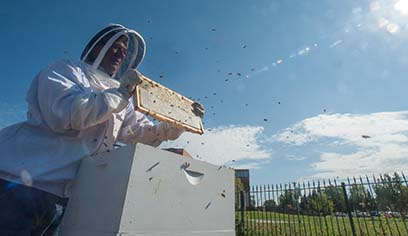 UW-Superior professor and retired staff member develop device to address centuries-old problem for beekeepers